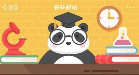 森林驿站4月16日下面哪个关于熊猫的描述是正确的
