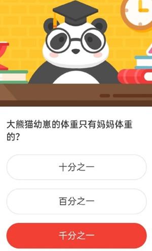 森林驿站4月23日大熊猫幼崽的体重只有妈妈体重的